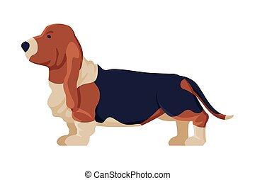 hund, purebred, tier, jagdhund, haustier, abbildung, basset, seitenansicht, vektor