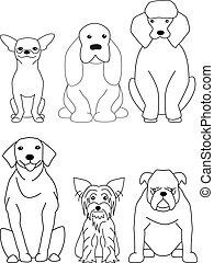 hund, sammlung
