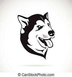 hund, sibirisch, hintergrund., vektor, heiser, weißes
