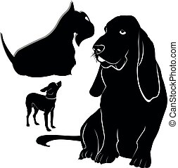 hund, terrier, vektor, hintergrund, freigestellt, weißes, basset, chihuahua, schottisch