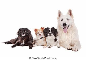 Hundegruppe.