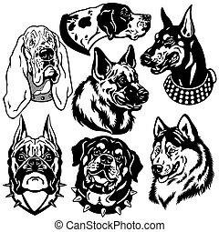 hunden, heiligenbilder, köpfe, satz