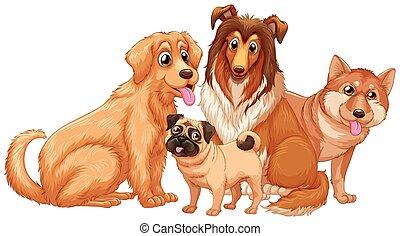 hunden, junger hund, reizend, verschieden, art