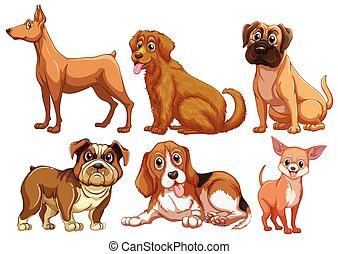 hunden