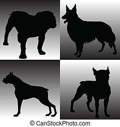 Hundeschwachsinn