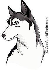 husky., sibirisch, vektor, junger hund, porträt, dog., illustration., junger, blauäugig