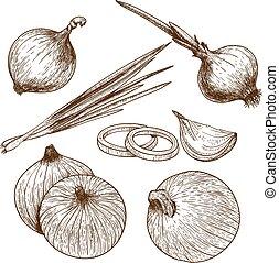 Ich graviere die Zwiebel.