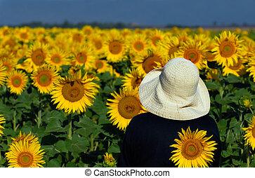 Ich schaue mir Sonnenblumen an