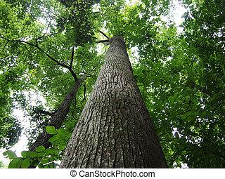 Ich sehe große Bäume im Wald.
