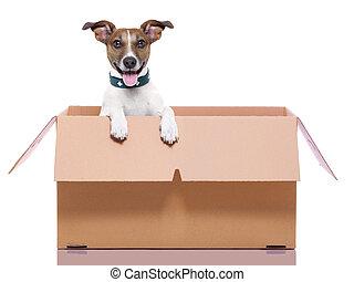 Ich ziehe Boxhund.