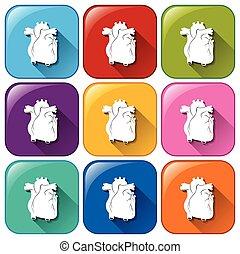 Icons mit einem inneren Organ.