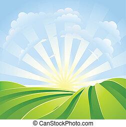 Idyllische grüne Felder mit Sonnenschein und blauer Himmel