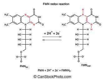 Illustration der FMN Redox Reaktion.