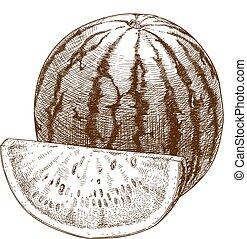 Illustration der Wassermelone.