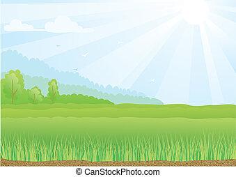 Illustration des grünen Feldes mit Sonnenscheinstrahlen und blauen Himmel.