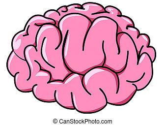 Illustration des menschlichen Gehirns im Profil