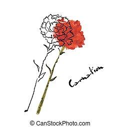 Illustration mit Nelkenblüte.