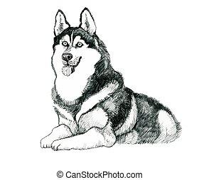 illustration., sketched, hund, hand, heiser, gezeichnet
