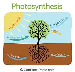 illustration., vektor, photosynthese, diagram., schematisch, prozess