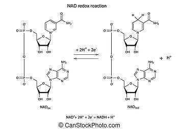 Illustration von NAD Redox.