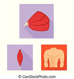 illustration., zellen, symbol., sammlung, koerperbau, vektor, design, muskel, bestand