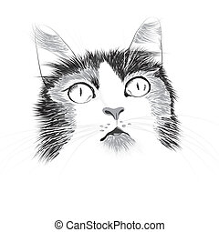 Illustrationskopf einer Katze.