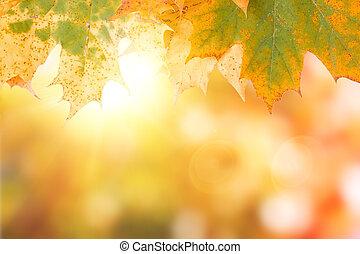 Im Herbst hinterlassen Ahornsteine den Hintergrund mit Bob