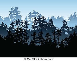 Immergrüner Wald.