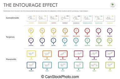 infographic, geschaeftswelt, strukturell, begleitung, effekt, horizontal, formeln