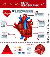 infographic, herz, banner, senkrecht, statistik