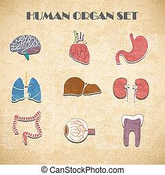Innere Organe eingestellt.