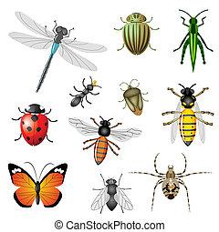 Insekten oder Käfer