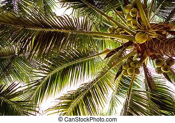 insel, freiberufler, tropische , bäume, arbeit, edv, handfläche, m�dchen