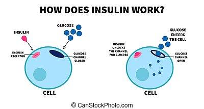 insulin, wichtigkeit, vektor, arbeit, abbildung, insulin., channel., schließt, wohnung, wie, erzieherisch, traubenzucker, visuell, diagram., medizin