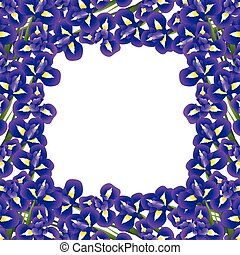 Iris-Blume Grenz 2