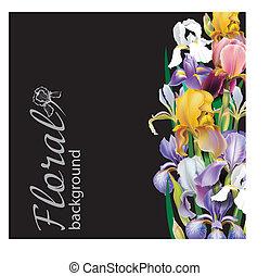 Iris-Blume-Vektor Hintergrund.
