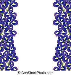 Iris Blumengrenze