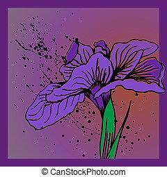 Iris-Blumenspritzer