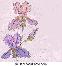 iris., vektor