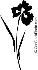 Irisblüte.