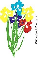 Irisblumen.