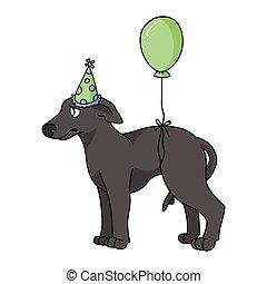 jagdhund, purebred, party, 10, karikatur, feier, clipart., eckzahn, rennsport, windhund, schnell, hund, dog., eps, hundehütte, freigestellt, lovers., inländisch, junger hund, pooch, reizend, hut, vektor, stammbaum, illustration.