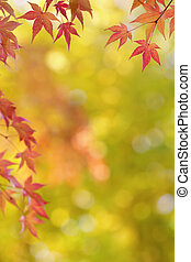 Japanischer Ahornbaum Blätter bunten Hintergrund im Herbst.