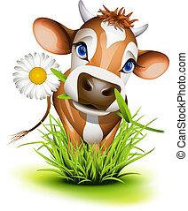 Jersey Kuh im Gras.