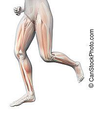 Jogging Frau - sichtbare Beinmuskeln.