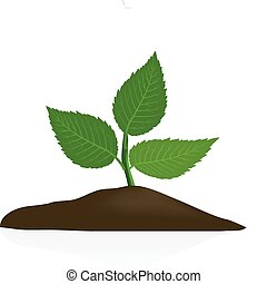 Junge Pflanze im dunklen Boden isoliert.