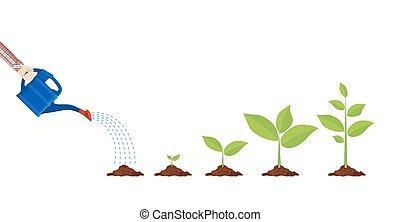 Junge Pflanze mit Wasserdose
