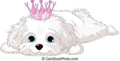 junger hund, havanese, krone