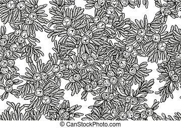Juniper Baumvektoren nahtlos. Hand gezeichnete Illustration Zweig mit Beeren auf weißem Hintergrund.