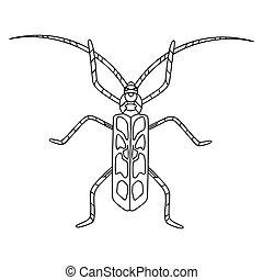 käfer, färbung, book., vektor, beetle-insect, erwachsene, anti-stress, buch, alpin, kinder, linear, abbildung, barbel